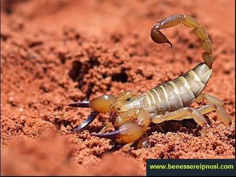 Perch sogno gli scorpioni che cosa significa - Scorpione e capricorno a letto ...