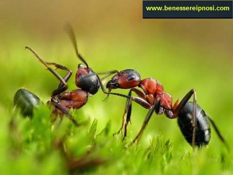 Sognare le formiche che cosa significa significato dei - Formiche in casa perche ...