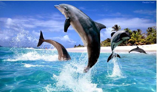 Sognare I Delfini Che Cosa Significa Significato Dei