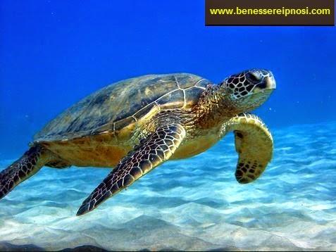 Sognare le tartarughe hai bisogno di rilassarti for Tartarughe in amore