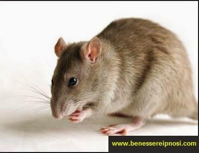 Sognare Con Topi Ratti E Roditori Significato Dei Sogni